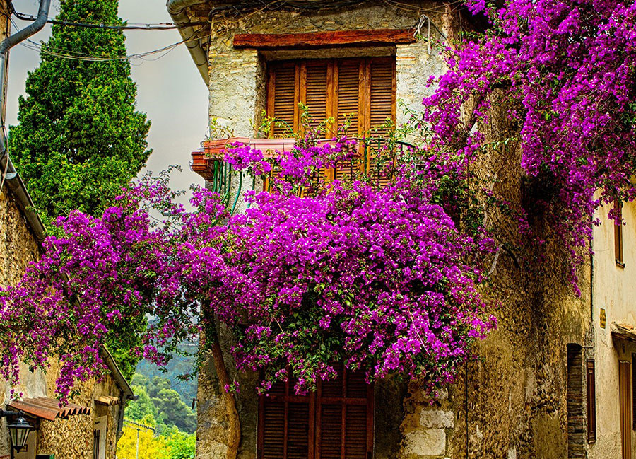Colors Of Provence 2021